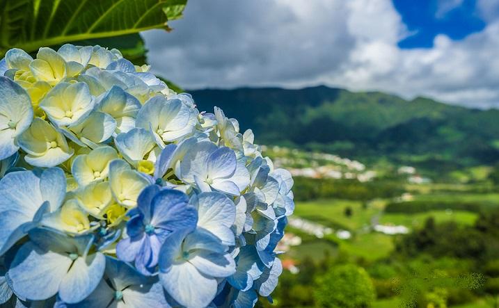 Portugal Azores Sao Miguel Island Photography 3 By Messagez.com