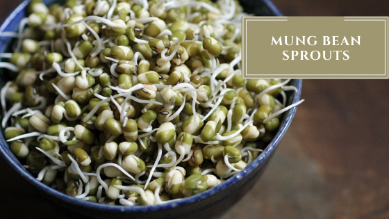 mung bean sprouting