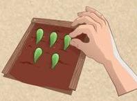 Propagate succulents step 3