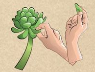 Propagate succulents step 1